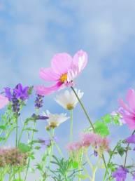 fleurs truffaut quimper