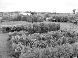 jardinerie-lorient-nicot